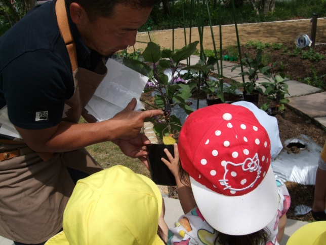 保育園での野菜栽培
