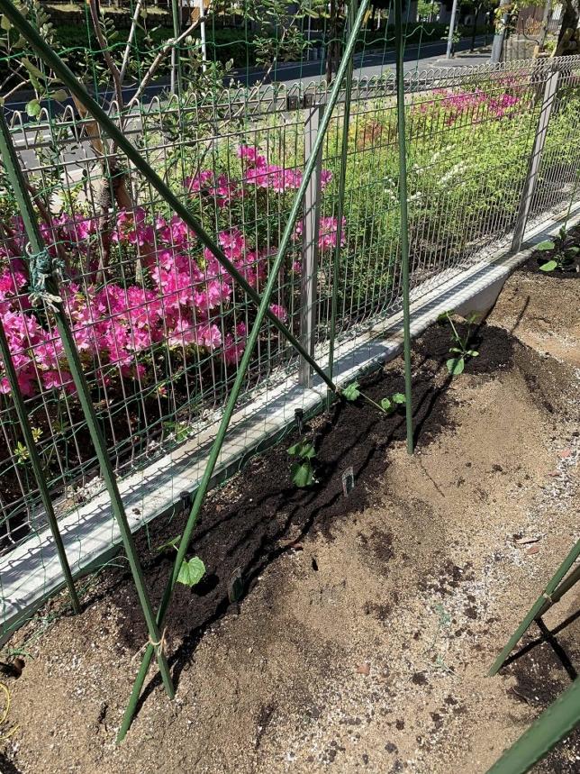 夏野菜の家庭菜園講習会
